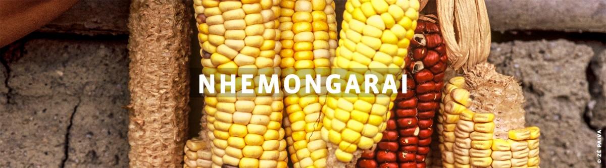 Nhemongaraí - Uma reverência à vida Milhos de diferentes tipos ao fundo do texto